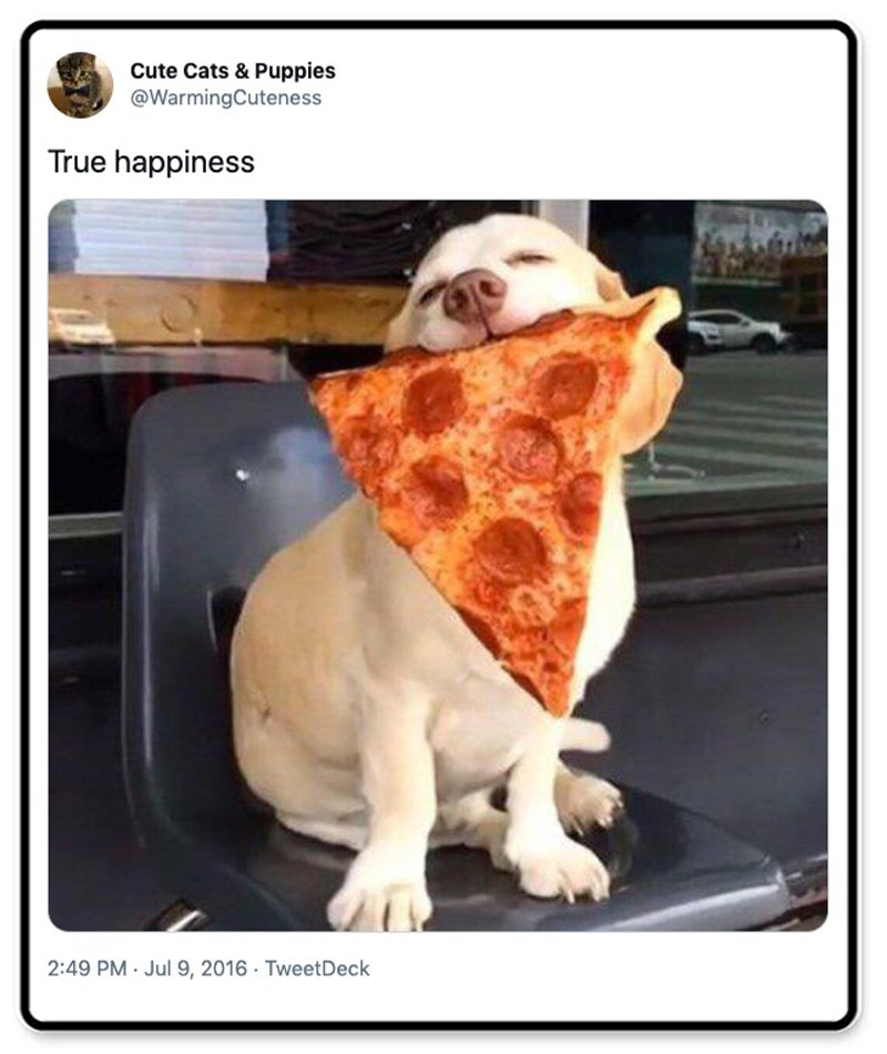 Dog with a pizza slice