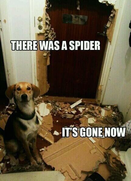 Spider vs. dog