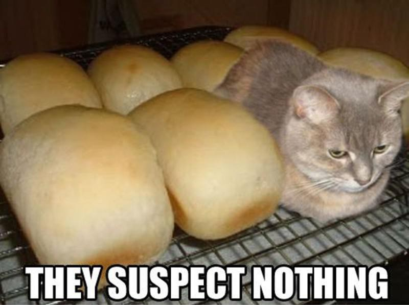 Cat with fresh bread loaves