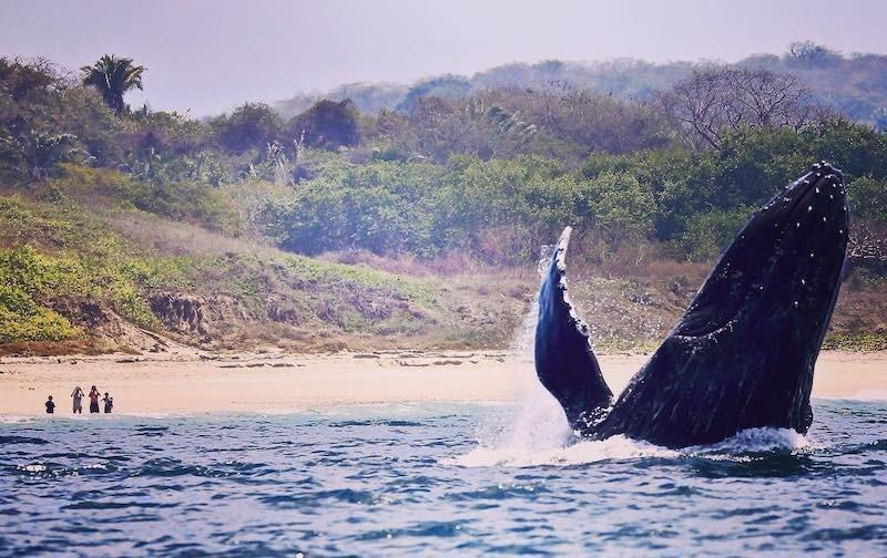 Whale in Sayulita