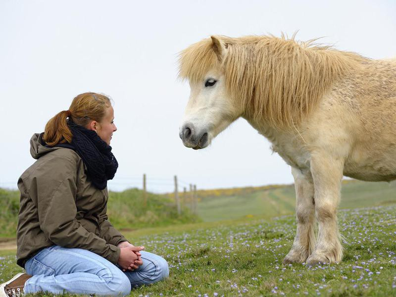 Young Girl With Shetland Pony