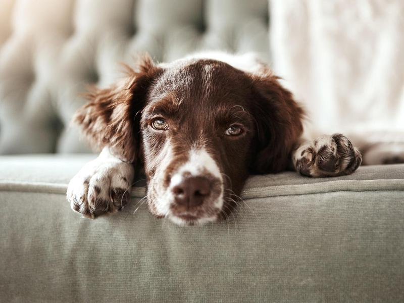 Who Gets the Dog in a Divorce?