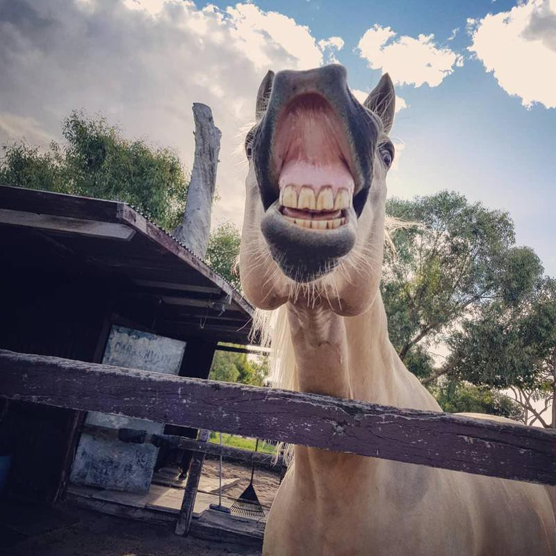 Horse Smiling In Stable