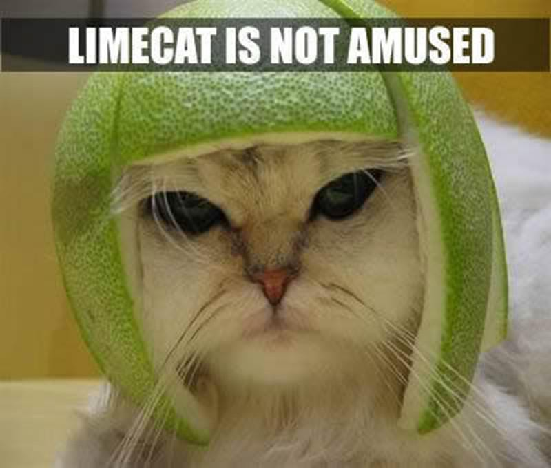 Cat wearing hat made out of lime rind