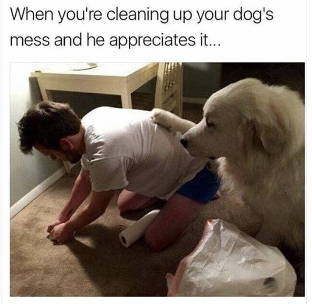 Appreciative dog
