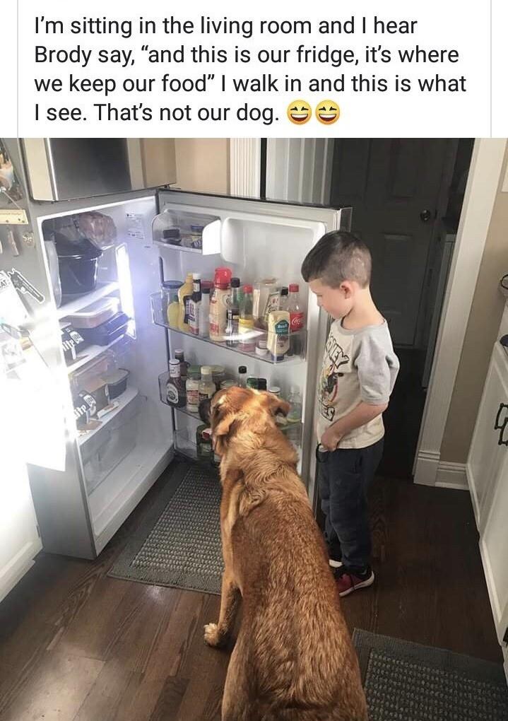 Fridge dog