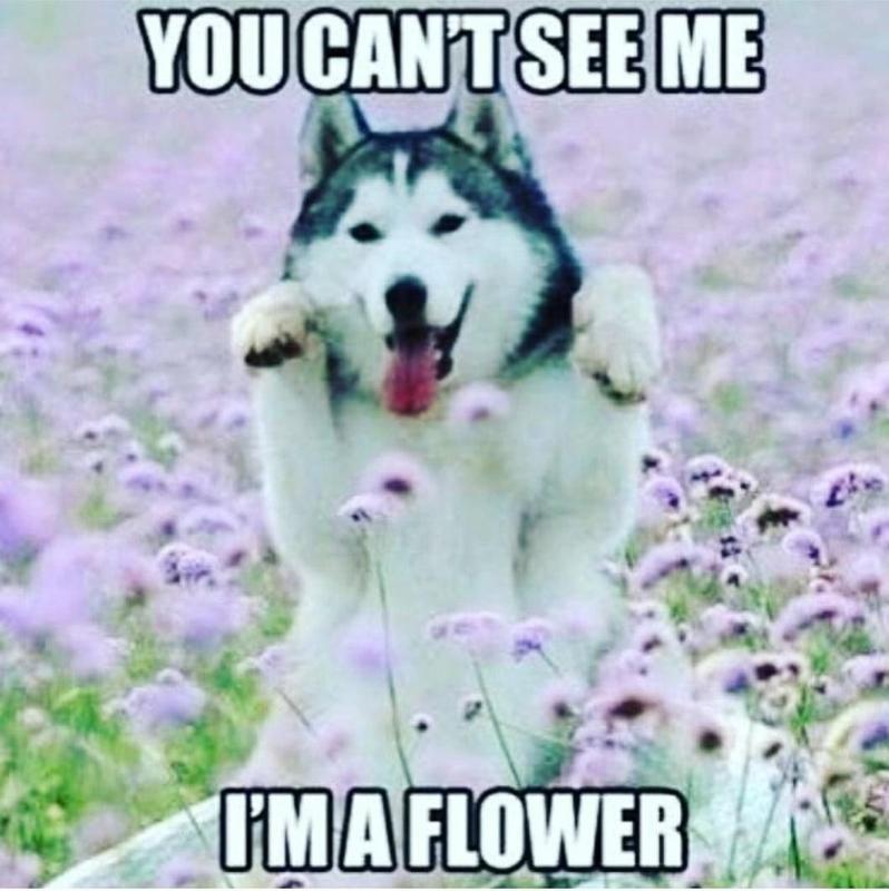 Dog hiding behind flowers