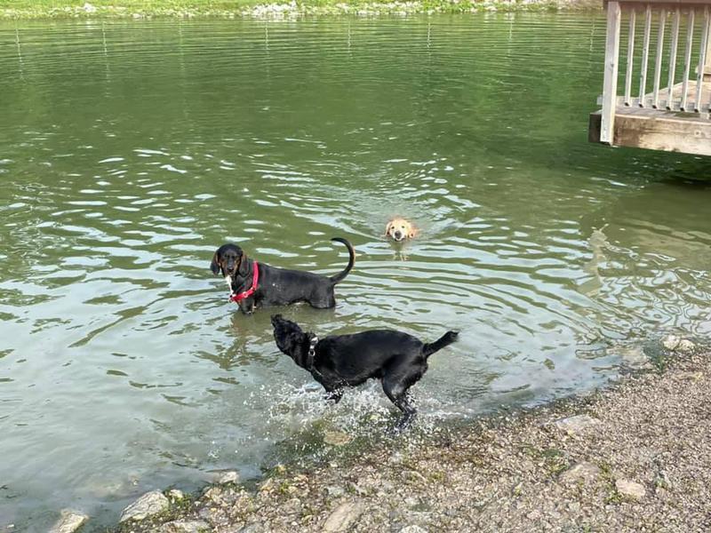 Thornberry Off-Leash Dog Park