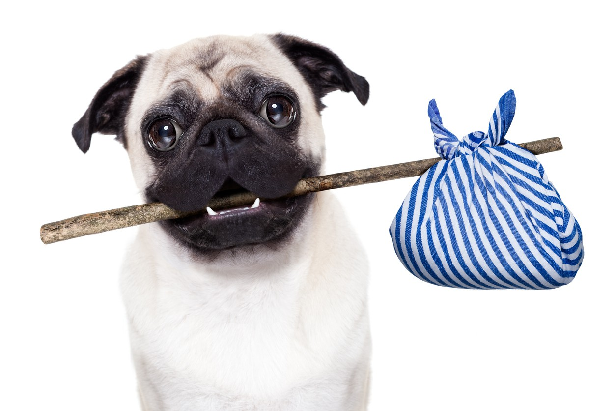 Dog with  bag and stick