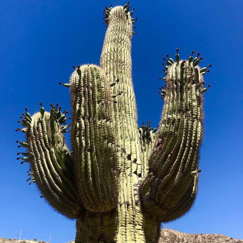 South Mountain Park Preserve cactus