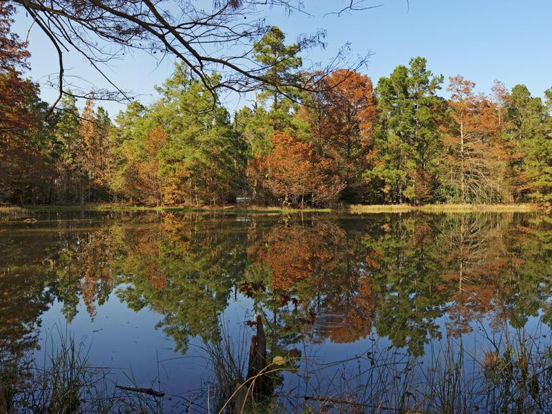 Reflections on a Pond-W G Jones State Forest