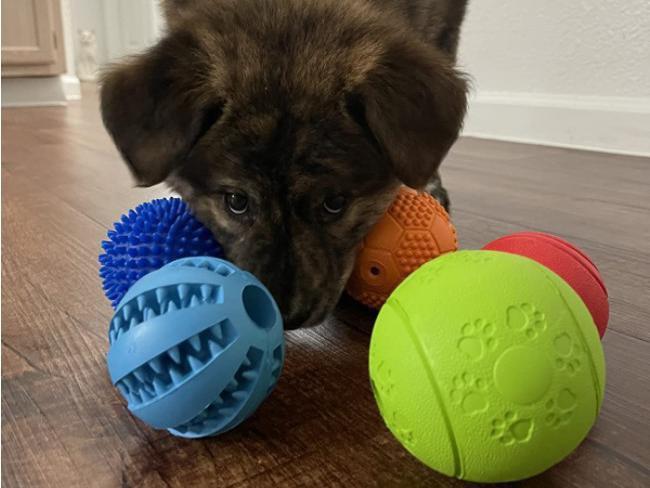Slopehill 5 Interactive Dog Toys Balls