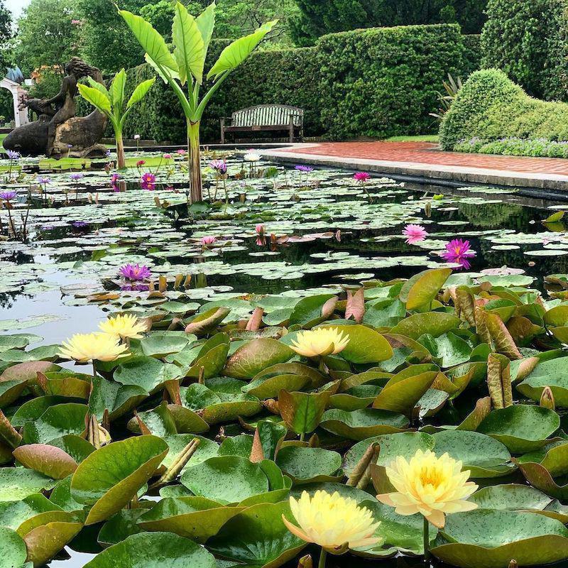 City Park lily pond
