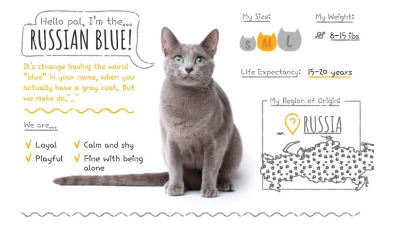 Russian blue cause allergies