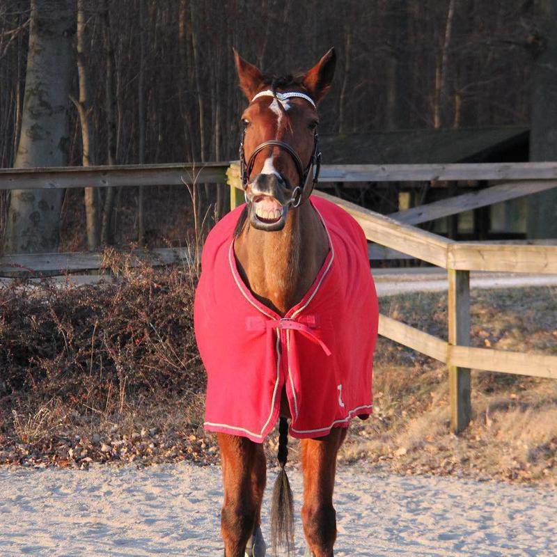 Horse In Jacket Smiling
