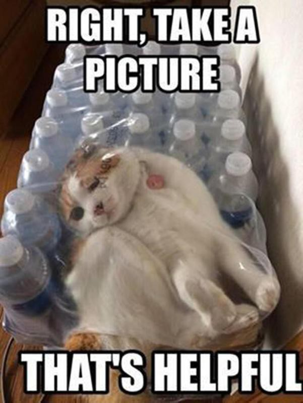 Cat stuck in water bottle case