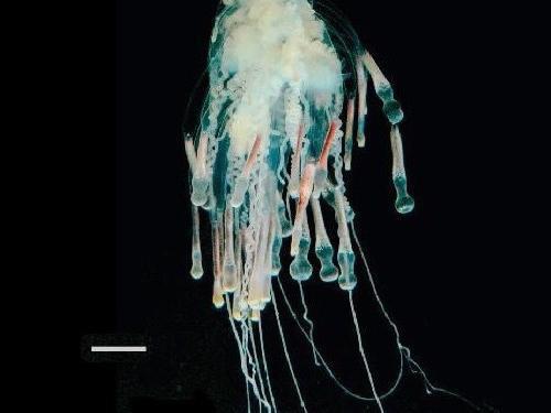 Flying Spaghetti Monster Sea Creature