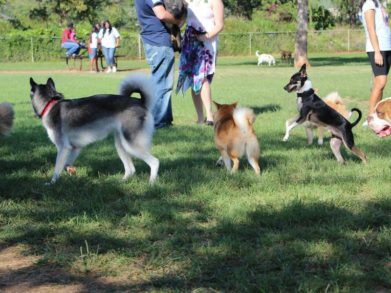 Hawaii Kai Dog Park