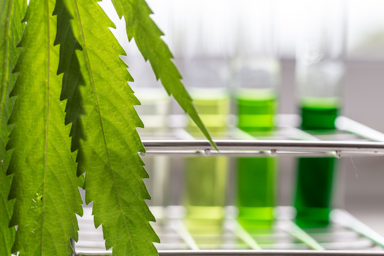 Analysis of cannabis in laboratory