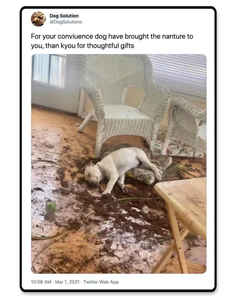 Dog sleeping in dirt