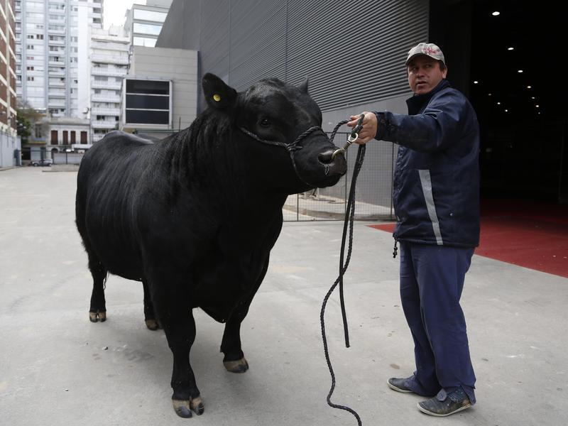 Mbappe the bull