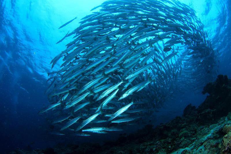 Barracuda Point