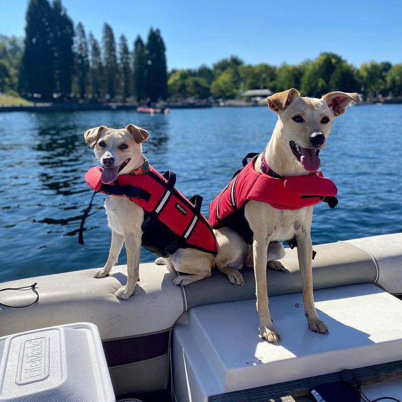 two dogs out on the water