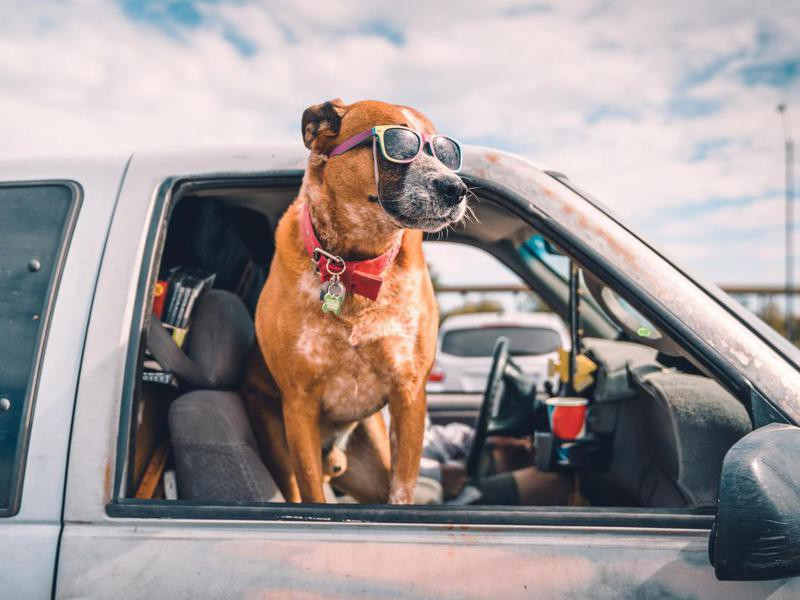 Your Dog Is Your Copilot