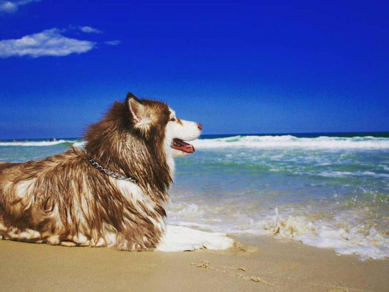 Dog laying on the sand at Island Beach State Park