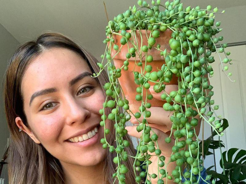 Girl holding string of pearls plant