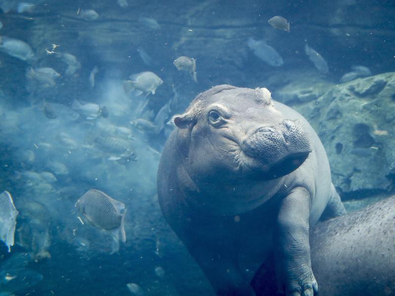 Hippo Cove