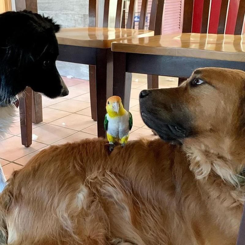 Dogs and parrot