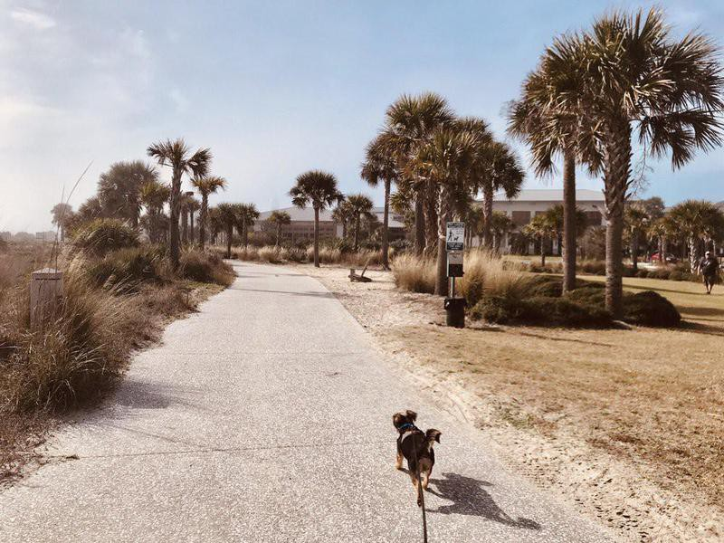 Dog on a walk at Great Dunes Beach Park