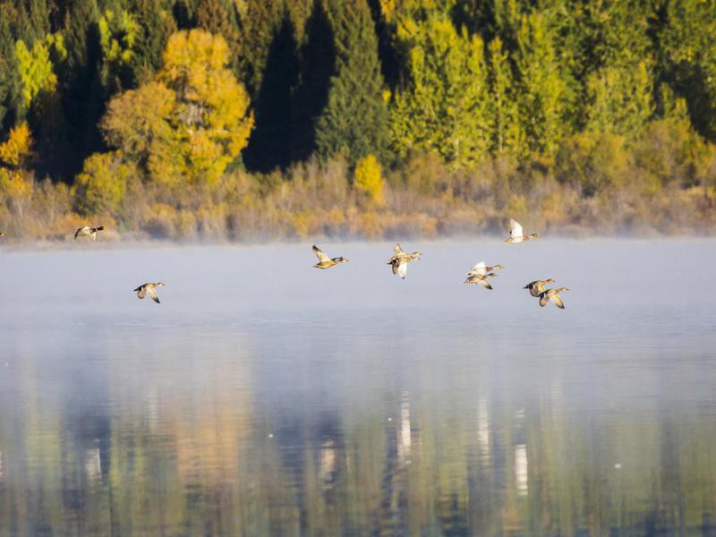 Birds in Grand Teton National Park