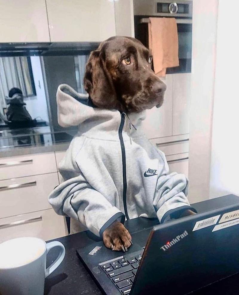 Dog working at a desk in a sweatshirt