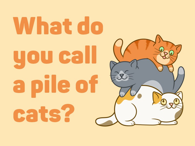 Pile of cats