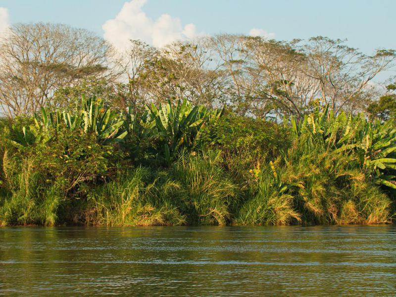 Big trees at Rio Tarcoles in Costa Rica