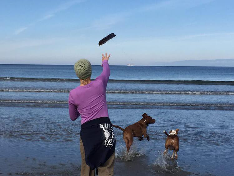 Dogs playing fetch at the beach