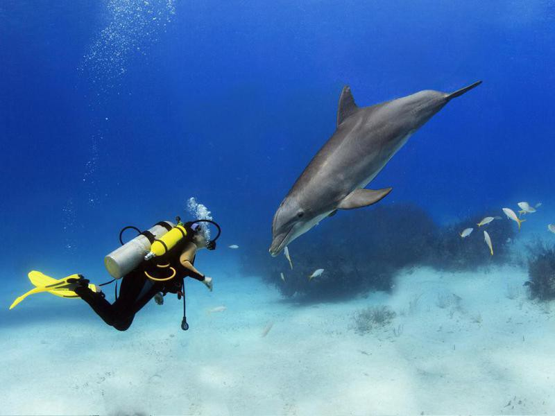 Diver Playing With Dolphin