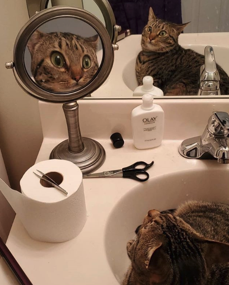 Cat sees reflection in mirror