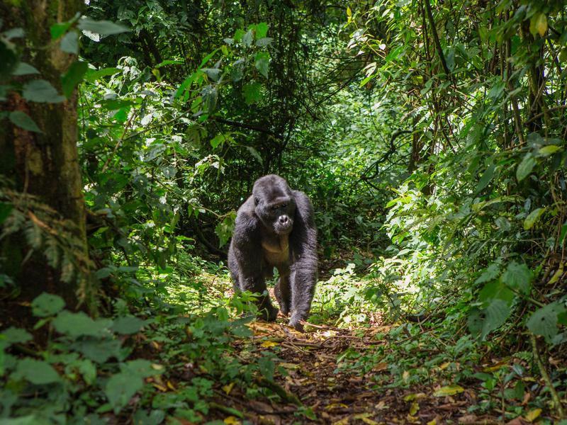 Bwindi National Forest