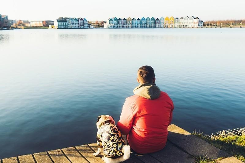 man and pug in netherlands