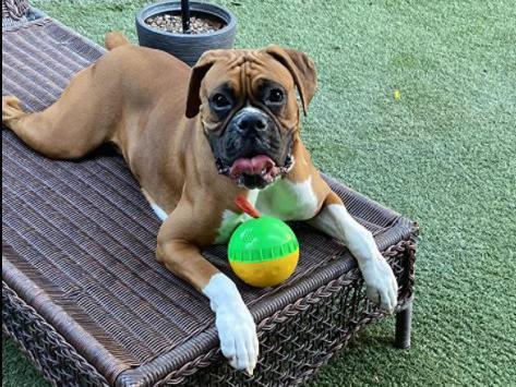 Holysteed Dog Treat Ball, Giggle Mentally Stimulating Dog Toys