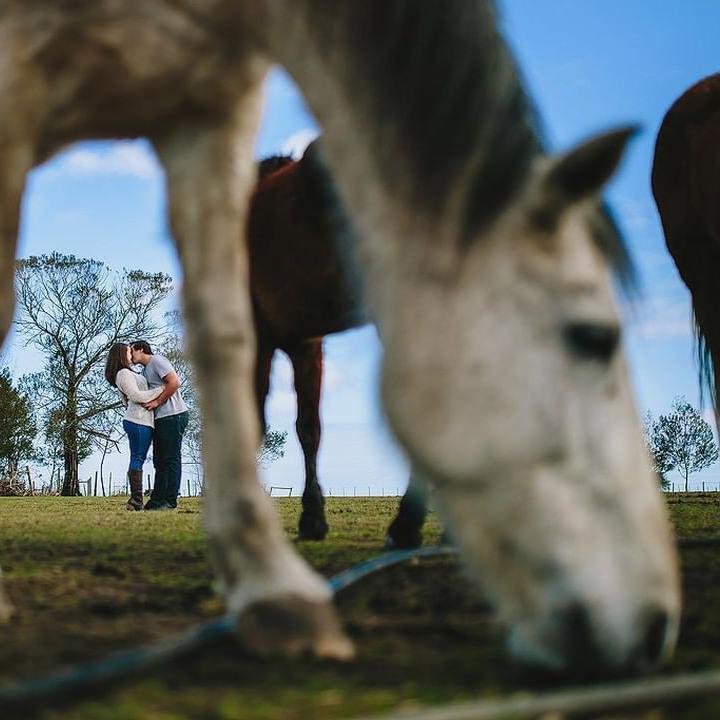 Horses interrupting romantic photo shoot