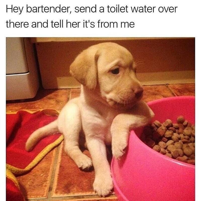 puppy at food bowl