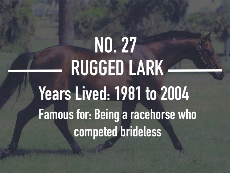 Rugged Lark
