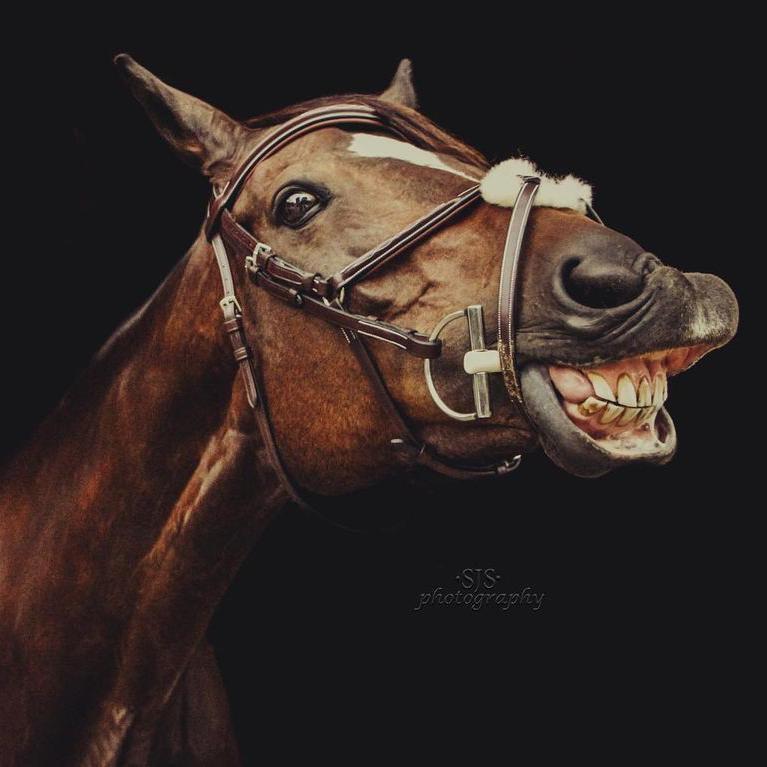 Portrait of Horse Smiling
