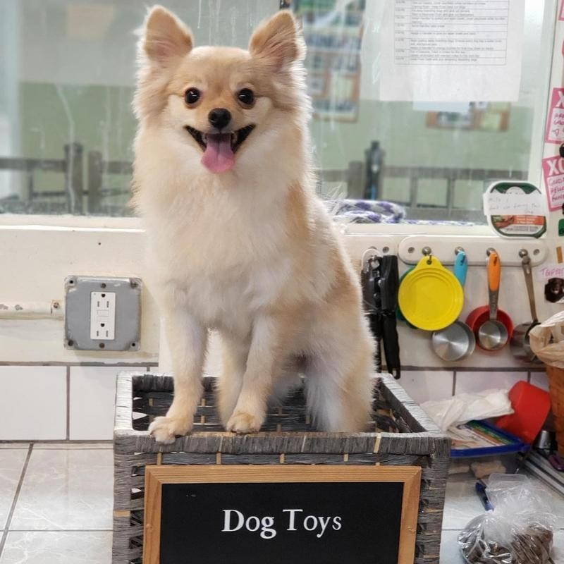 New York Dog Spa and Hotel