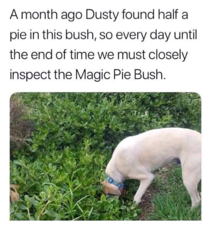 Dog digging in bush