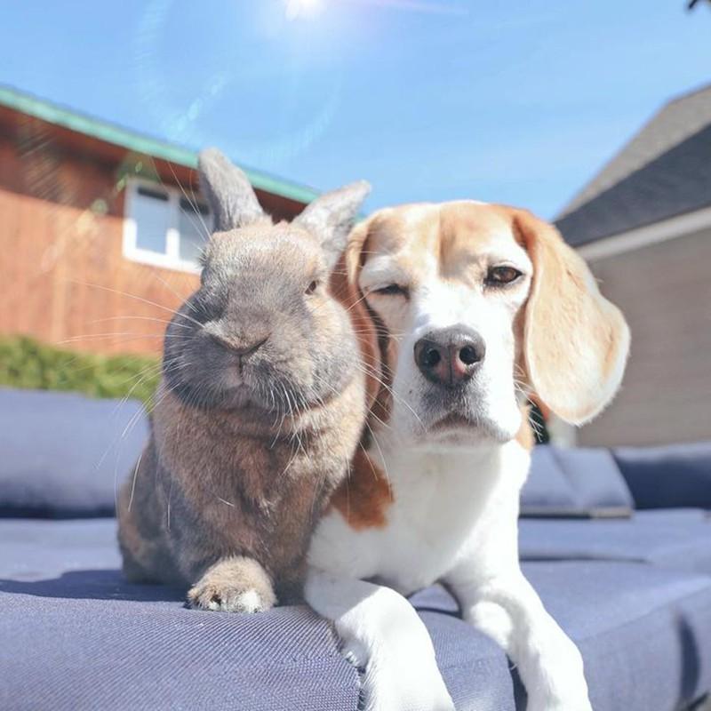 Rabbit and beagle